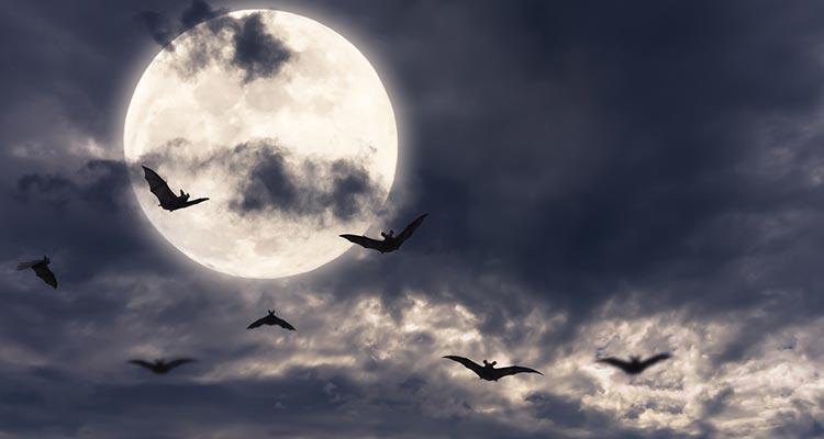 Faszination und Schauder – ein Fest für die Fledermaus