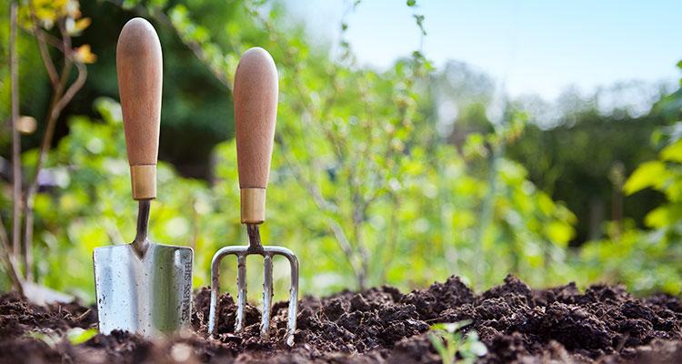 Das Gartenjahr: Ein grüner Daumen hat immer was zu tun